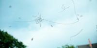 Qué son las moscas volantes